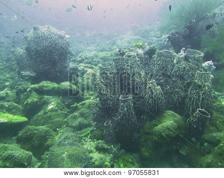 Closed Up The Coral In North Andaman, Thailand