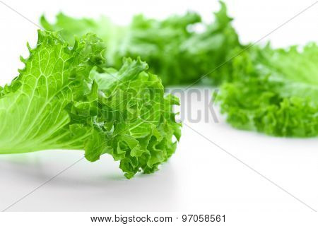 Fresh lettuce, closeup