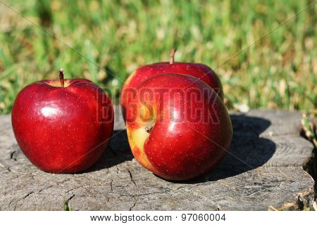 Ripe red apples on stump outdoors