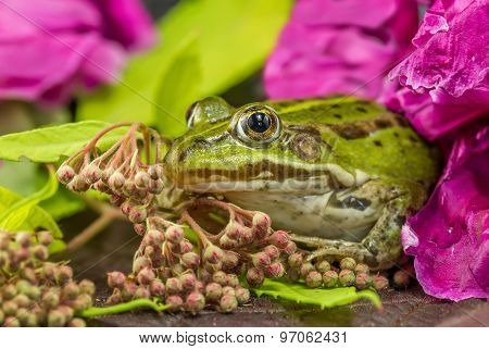 Frog Among The Flowers