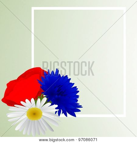 Vector white background with chamomile, cornflowers and poppy