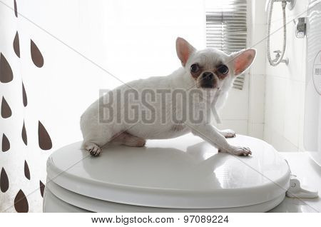 Dog in bath room