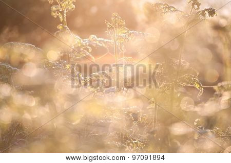 Fern Plants In Sunrise Light