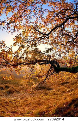 Sunshine Through Tree Branches In Autumn