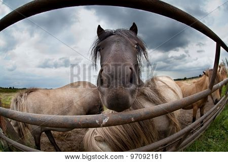Pony Muzzle Close Up