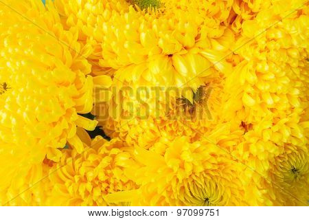Bunch of mum flowers