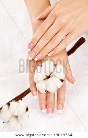 Hands With Cotton Crop
