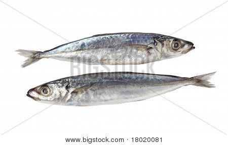 Decapterus pescado