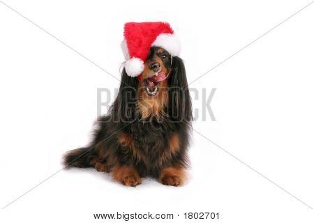 Cute Dachshund In Santa Hat