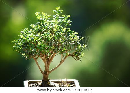 bonsai on green grass
