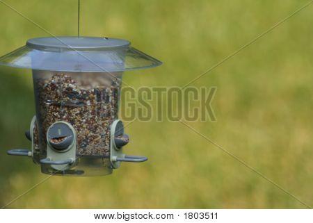 Lonely Bird Feeder
