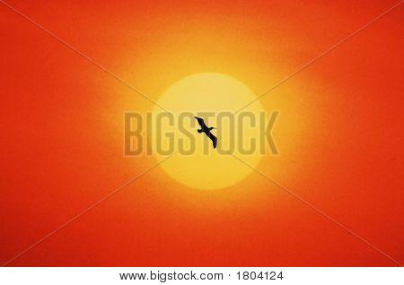One Bird Flying In Sundown