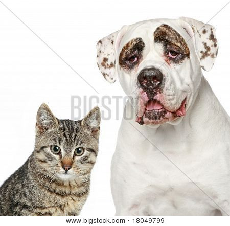 Kitten And Strong Dog