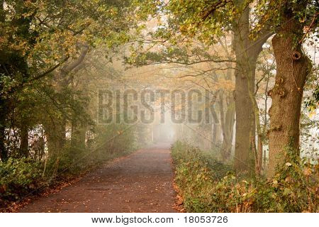 A peaceful trail into the mist surrounded by beautiful trees in autumn colours