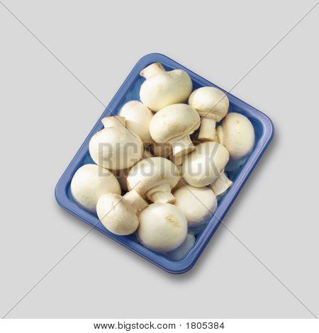 Campignon Mushroom In Blue