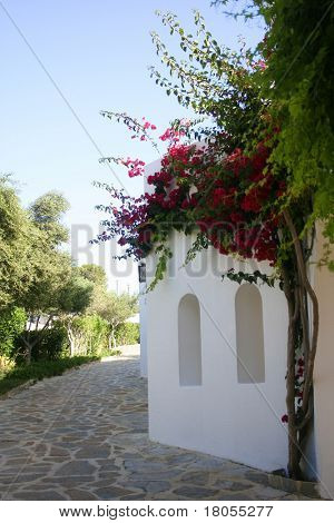 White wash stone house with arch windows, bougainvillea growing by the wall.