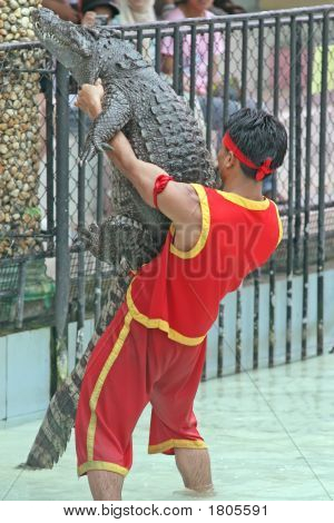 Crocodile Wrestling