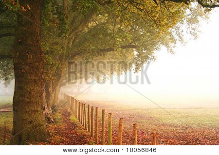 Beautiful big trees in autumn colours by the side of a fence next to an open field on a misty morning.