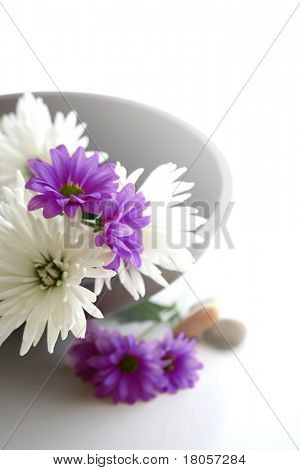 Wooden bowl with fresh red and white chrysanthemums and natural pebbles on white with copyspace. Suitable for spa and relaxation setting.