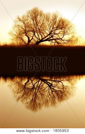 Riparian Willow Reflection
