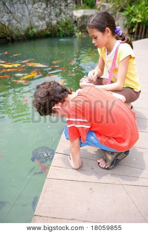 Hello Little Turtle. Young boy and his sister admiring a young turtle as it swims towards them looking for food.
