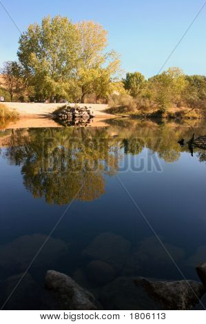 Riparian Reflection