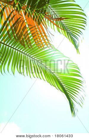 Green palm fronds blowing against the tropical breeze