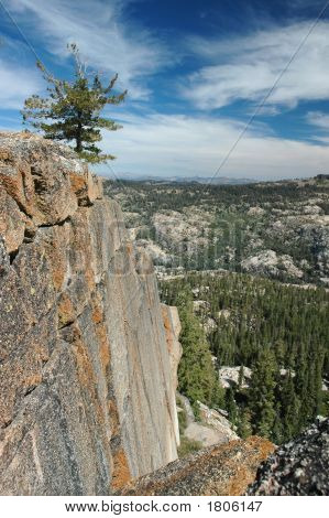 Lone Pine On Cliff