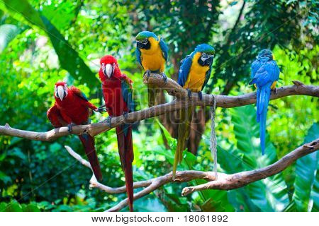 Colorful red and blue macaw perched on a branch.