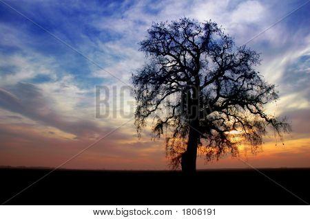 Árbol de roble de invierno