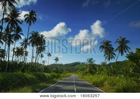 Long windy road in the tropics line with coconut palm trees alongside.