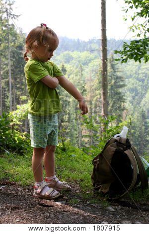 Viaje en el bosque