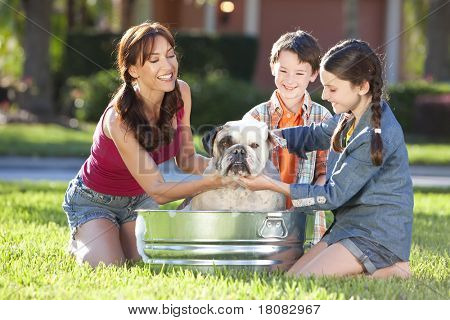 A beautiful mother, son and daughter family washing their pet dog, a bulldog outside in a metal tub.