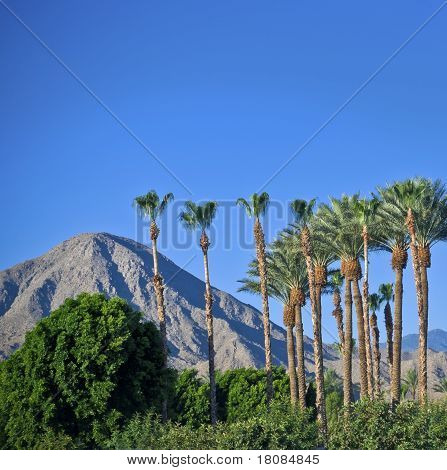 Palm Springs Landscape