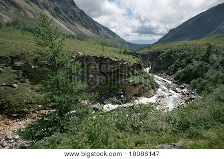 Larch, ravine of mountain river with rocks. Siberia. Buryat republic. Russia. East Sayan mountains.