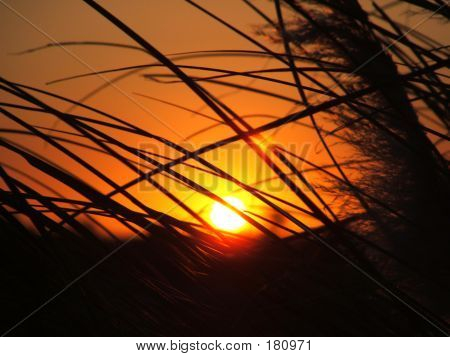 Sun Through Tall Grass