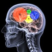 stock photo of radiogram  - X-Ray of a male skeleton with a series of colored gears in his head seen through his brain for the concept of thought.