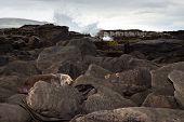 Sea Lion Resting On Rocks