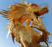 image of dragon head  - gilded chinese dragon taken pictures on uniform background - JPG
