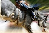 foto of bucking bronco  - Close - JPG