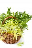 picture of escarole  - Curly escarole endive leaves on a wicker basket - JPG