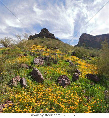 Picacho Mountains