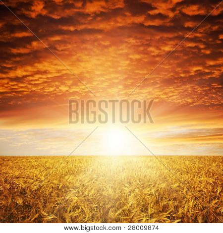 golden sunset over wheat field