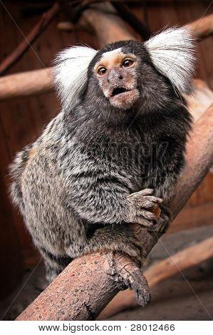 Portrait of monkey in the Novosibirsk Zoo