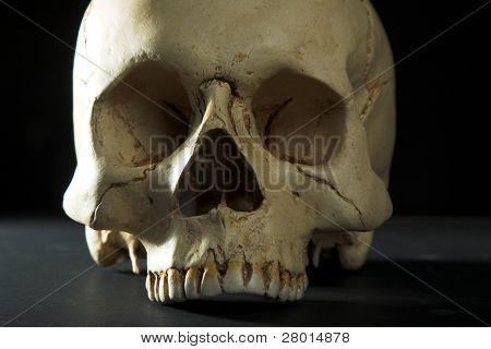 Homo Sapience Schädel auf schwarzem Hintergrund isoliert