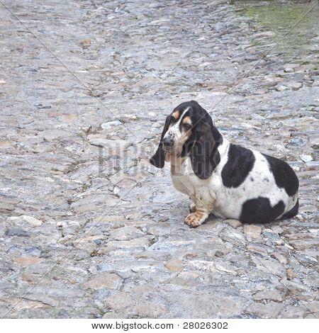 Dog pet