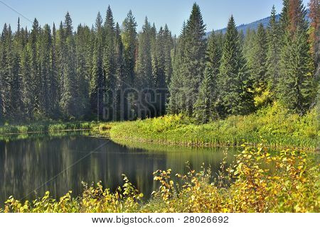 The silent mountain lake surrounded by fur-trees and bushes in the autumn