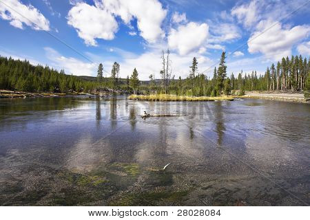The river Gibbons it is smoothly bent in Yellowstone national park