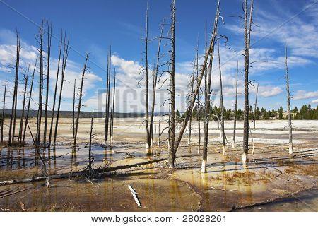 die ausgetrockneten Stämme der Bäume auf einer Fläche von heißen thermal Mineral Seen