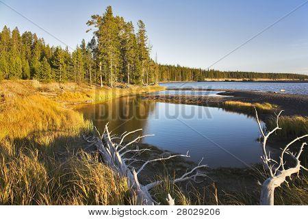 Azure lake on flat marshy plain in Yellowstone national park